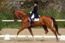 Beautiful Dressage Training - *NOT* anything like how my horse worked... LOL