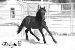 Horse in Round Pen