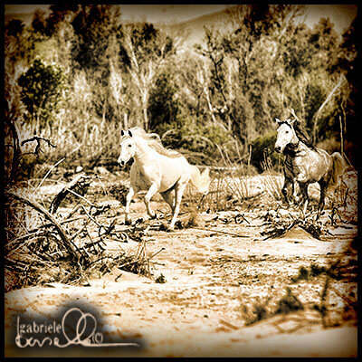 Horses running on the riverbed.