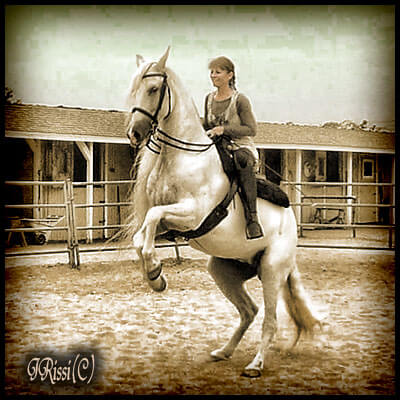 Horse trained for pesade.