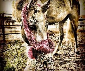 Whiskers Protect Your Horse . . . Like Bubblewrap! (NOT!)