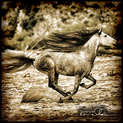 Horse running free on riverbed.